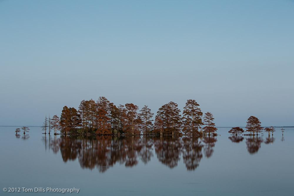 Cypress Trees at Sunset at Lake Mattamuskeet near Englehard, North Carolina