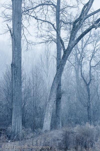 Winter morning on the Torrence Creek Greenway, Huntersville, North Carolina