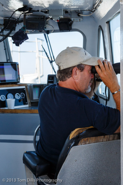 Our captain watches for whales and other boats, aboard our whale watching cruise with Pirate's Cove Whale Cruises