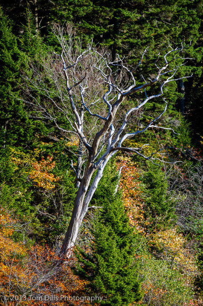 Fall color along the Blue Ridge Parkway near Waterrock Knob