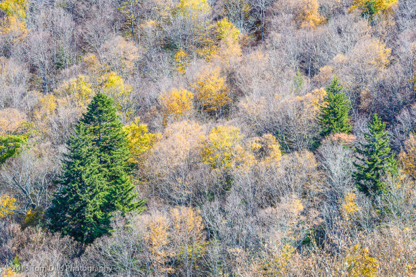 Fall color along the Blue Ridge Parkway near Lone Bald Overlook, MP 432