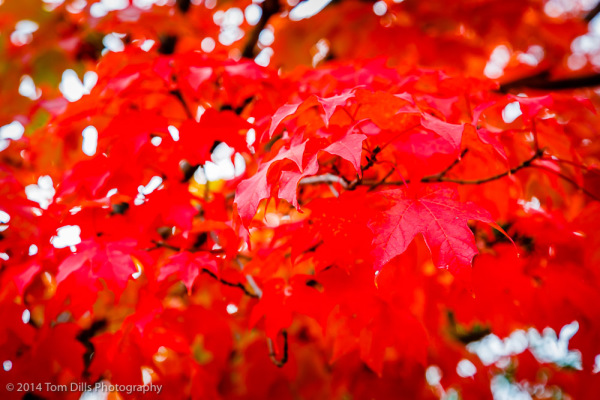 Fall Color in Waynesville, North Carolina