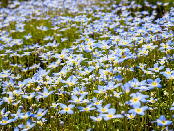 Spring along the Blue Ridge Parkway