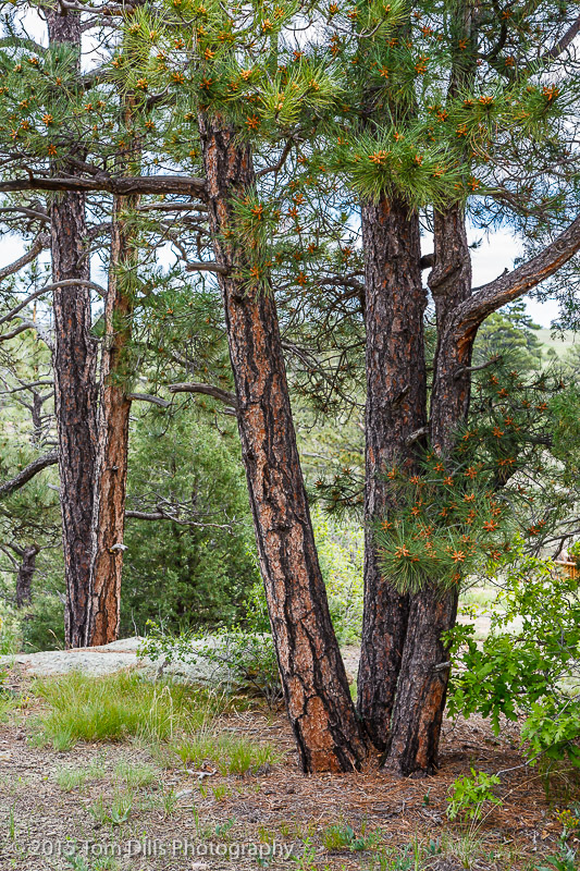 Castlewood Canyon State Park near Franktown, Colorado