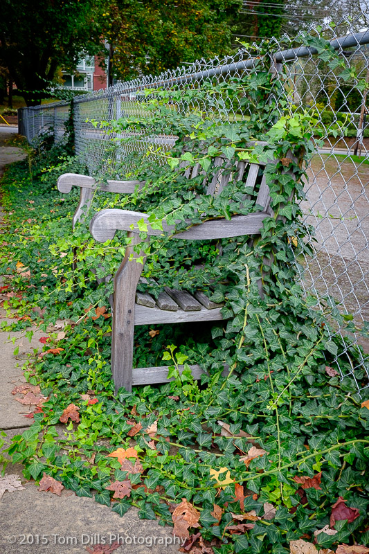 Vine covered bench in Waynesville, North Carolina