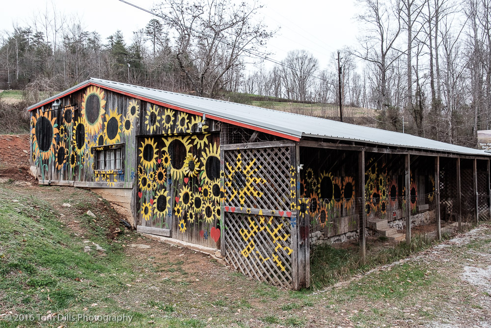 Sunflower-painted building at Slickrock Road and US 64 near Bat Cave, North Carolina