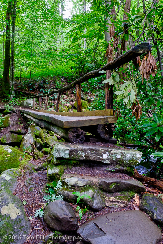 Along the Kephart Prong Trail in Great Smoky Mountains National Park, North Carolina