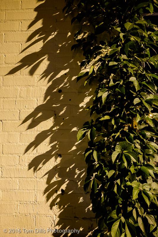 Shadows, Shelby, North Carolina